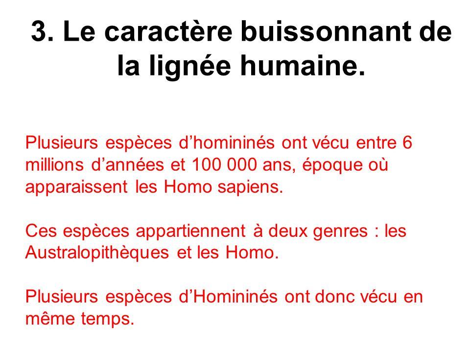 3. Le caractère buissonnant de la lignée humaine. Plusieurs espèces dhomininés ont vécu entre 6 millions dannées et 100 000 ans, époque où apparaissen
