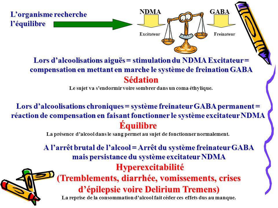 Lorganisme recherche léquilibre Lors dalcoolisations aiguës = stimulation du NDMA Excitateur = compensation en mettant en marche le système de freinat