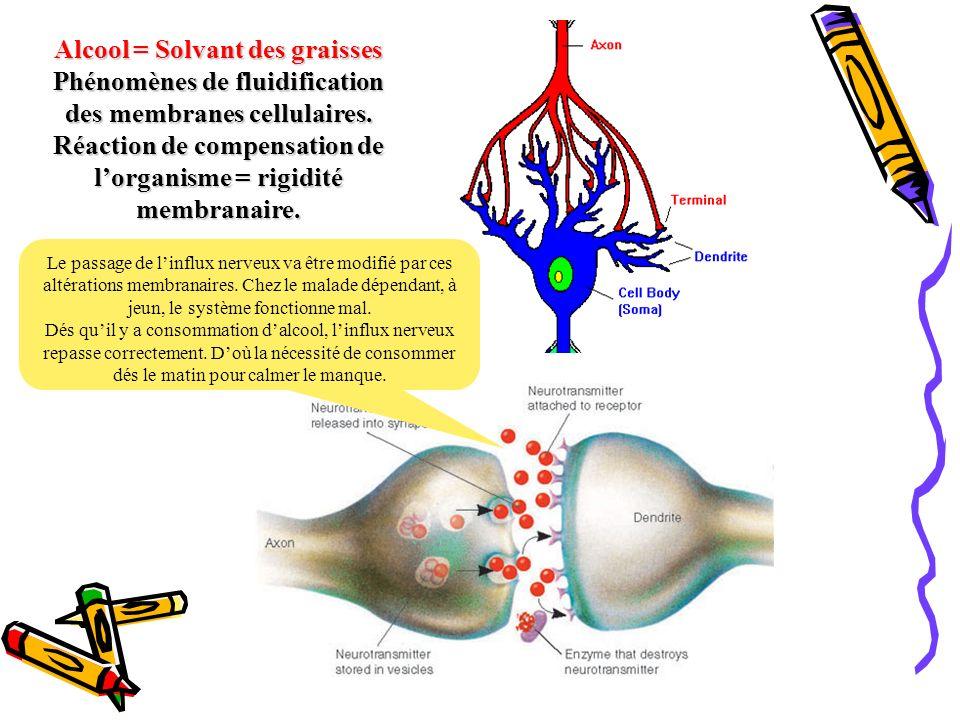 Alcool = Solvant des graisses Phénomènes de fluidification des membranes cellulaires. Réaction de compensation de lorganisme = rigidité membranaire. L