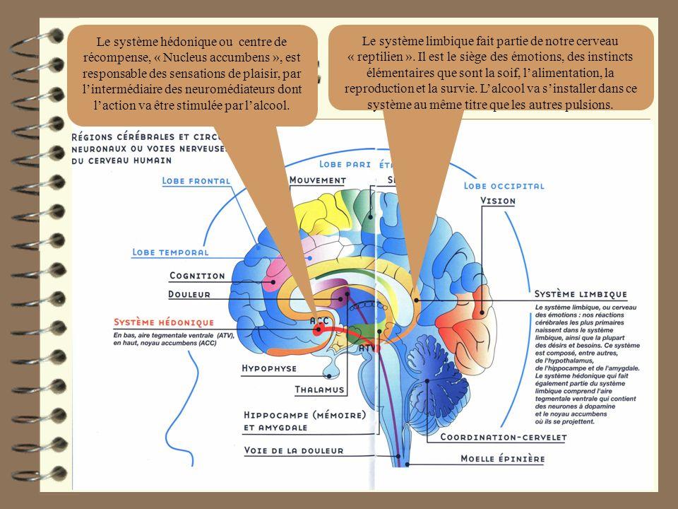 DEPENDANCE PSYCHOLOGIQUE Le système limbique fait partie de notre cerveau « reptilien ». Il est le siège des émotions, des instincts élémentaires que