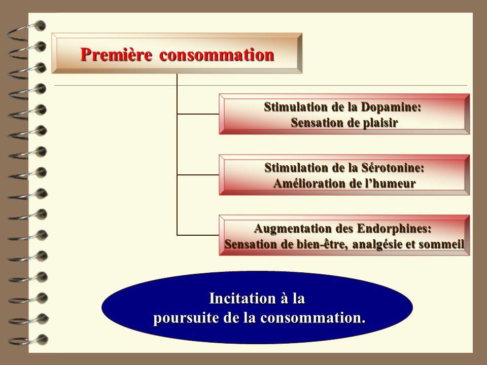 Première consommation Stimulation de la Dopamine: Sensation de plaisir Stimulation de la Sérotonine: Amélioration de lhumeur Augmentation des Endorphi