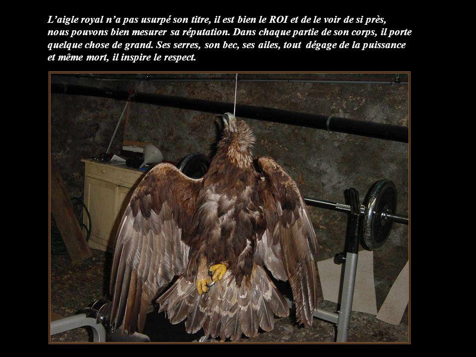 Non… ce nest pas vrai… le ROI est mort, il a perdu de sa superbe prestance, nous sommes consternés. La neige, le froid, la rareté de la nourriture, le