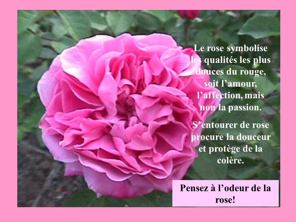 Le rose symbolise les qualités les plus douces du rouge, soit lamour, laffection, mais non la passion.