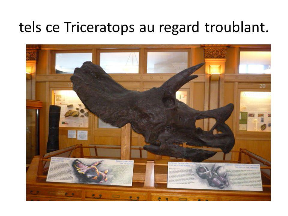 Jai noté aussi dans ce musée dhistoire naturelle, la présence de bestioles étonnantes