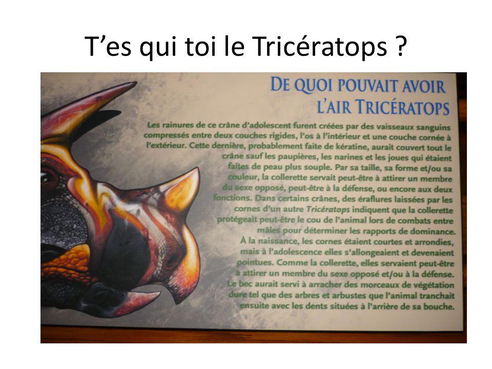tels ce Triceratops au regard troublant.