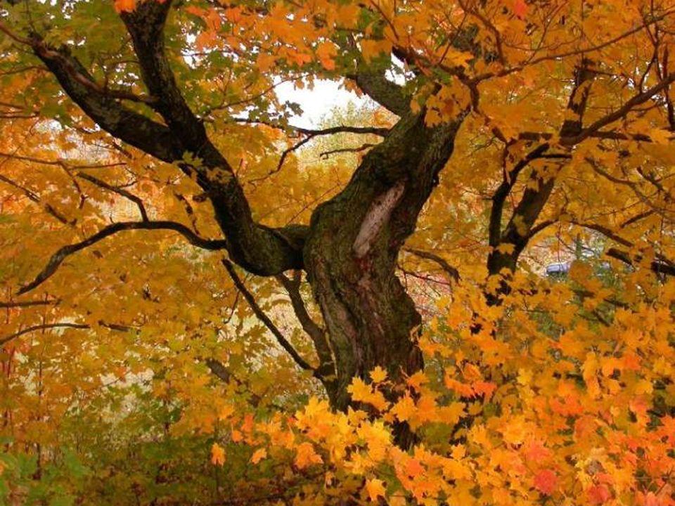 L'automne raconte à la terre les feuilles qu'elle a prêtées à l'été. (Georg Christoph Lechtenberg)