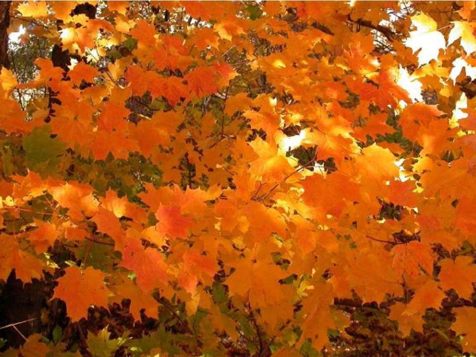 L'automne c'est cousu de moments de grâce, qui ne durent pas. (Janine Boissard)