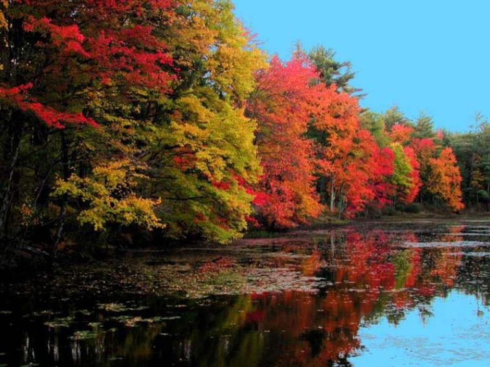 Triste est l'automne pour celui qui ne sait l'égayer. (Céline Blondeau)