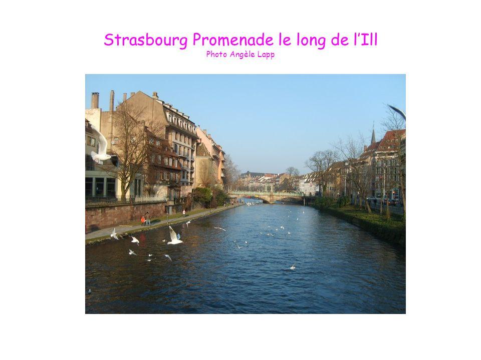 Strasbourg Promenade le long de lIll Photo Angèle Lapp