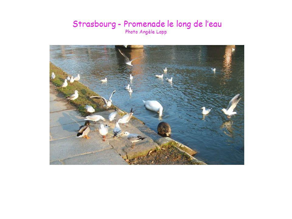 Strasbourg - Promenade le long de leau Photo Angèle Lapp
