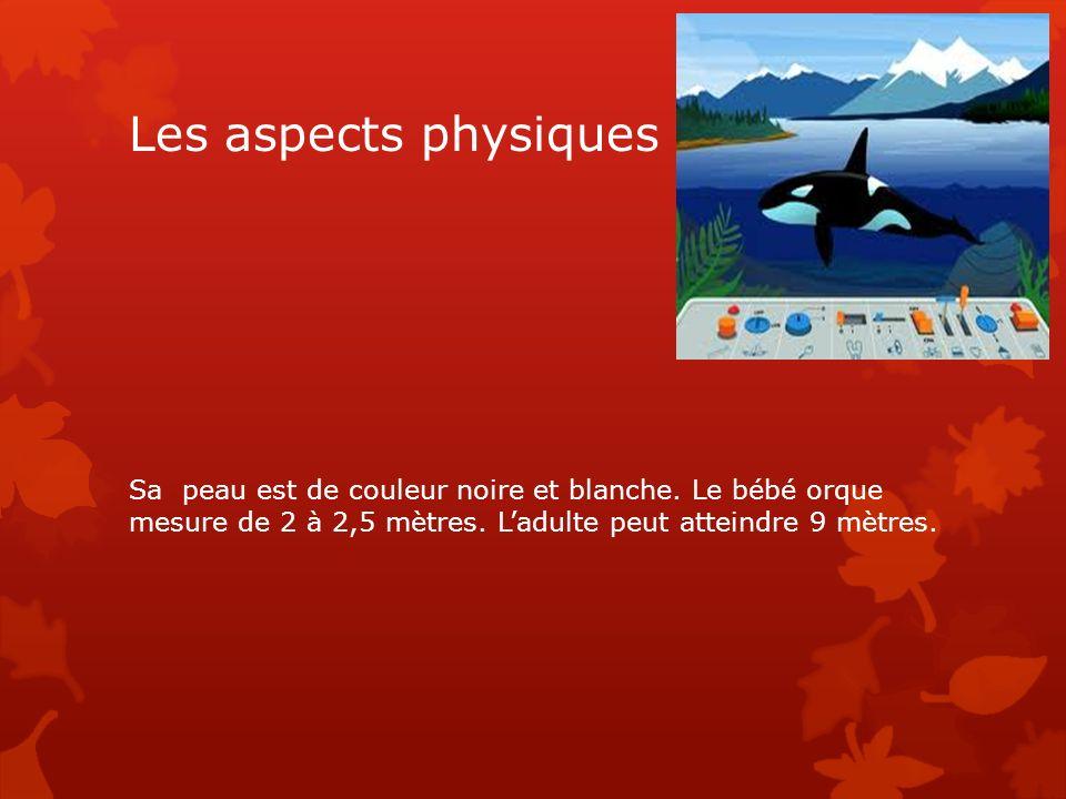 Les aspects physiques Sa peau est de couleur noire et blanche. Le bébé orque mesure de 2 à 2,5 mètres. Ladulte peut atteindre 9 mètres.