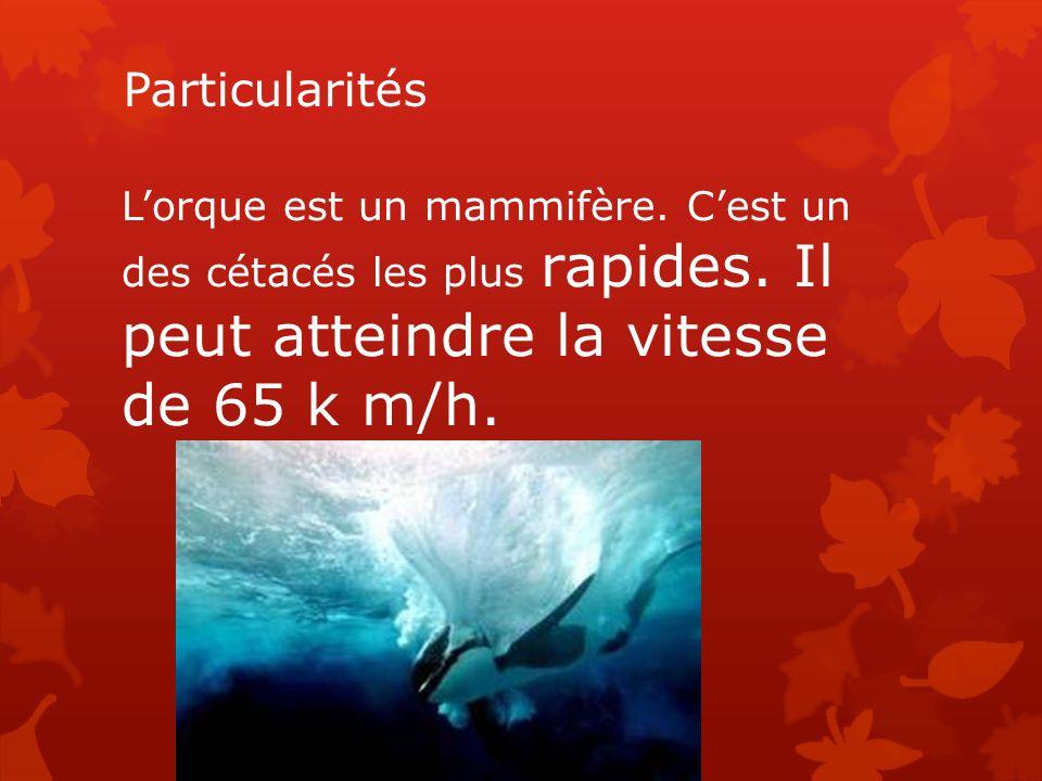 Particularités Lorque est un mammifère. Cest un des cétacés les plus rapides. Il peut atteindre la vitesse de 65 k m/h.