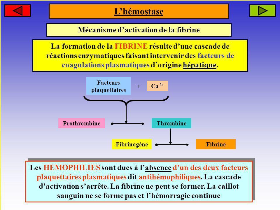Mécanisme dactivation de la fibrine La formation de la FIBRINE résulte dune cascade de réactions enzymatiques faisant intervenir des facteurs de coagu