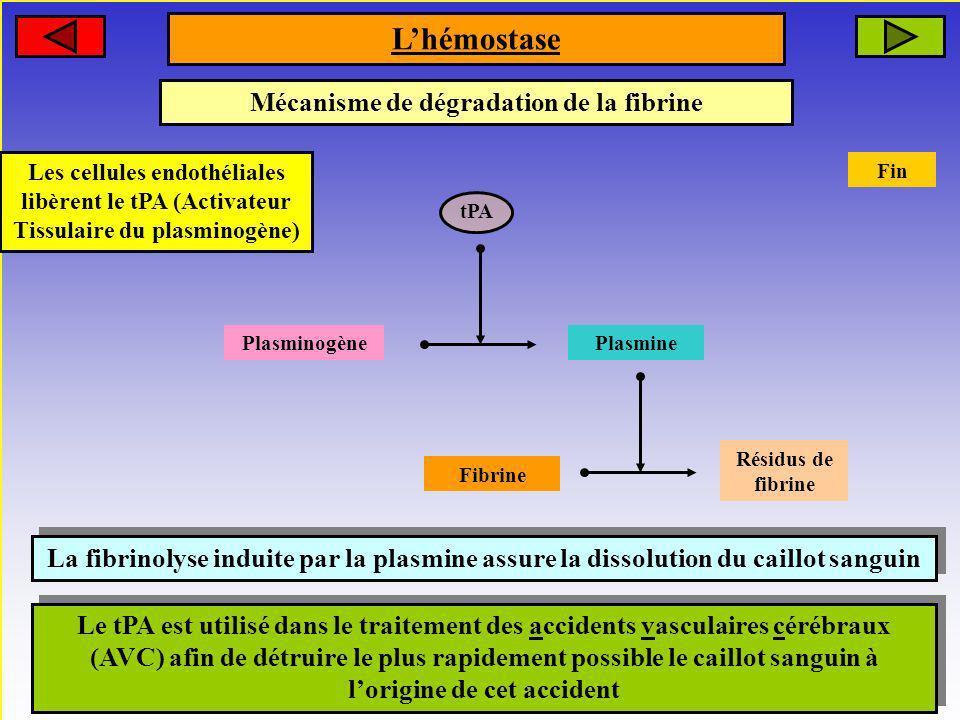 tPA Mécanisme de dégradation de la fibrine Les cellules endothéliales libèrent le tPA (Activateur Tissulaire du plasminogène) Plasminogène Plasmine Fi