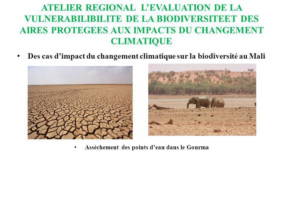 ATELIER REGIONAL LEVALUATION DE LA VULNERABILIBILITE DE LA BIODIVERSITEET DES AIRES PROTEGEES AUX IMPACTS DU CHANGEMENT CLIMATIQUE Des cas dimpact du