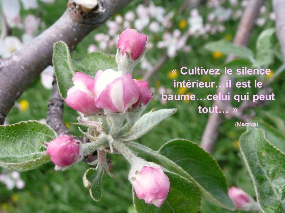 « Cultivez le silence intérieur…il est le baume…celui qui peut tout… » (Mardya)