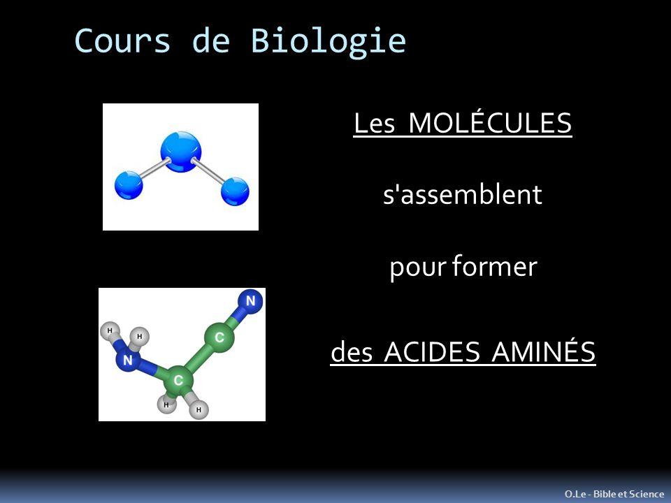 Cours de Biologie O.Le - Bible et Science Les MOLÉCULES s'assemblent pour former des ACIDES AMINÉS