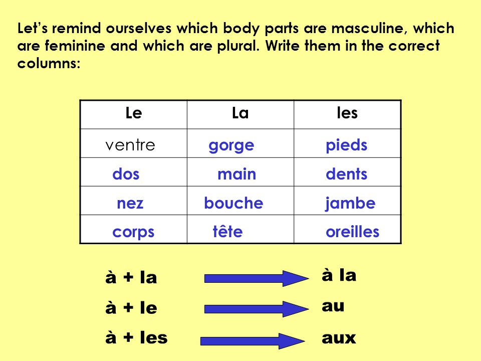 LeLales Lets remind ourselves which body parts are masculine, which are feminine and which are plural. Write them in the correct columns: ventre gorge