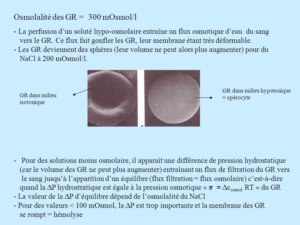 Osmolalité des GR = 300 mOsmol/l - La perfusion dun soluté hypo-osmolaire entraîne un flux osmotique deau du sang vers le GR. Ce flux fait gonfler les