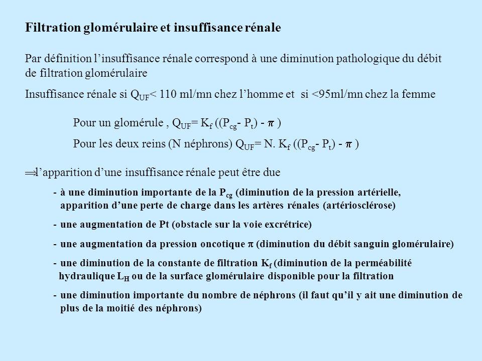 Filtration glomérulaire et insuffisance rénale Par définition linsuffisance rénale correspond à une diminution pathologique du débit de filtration glo