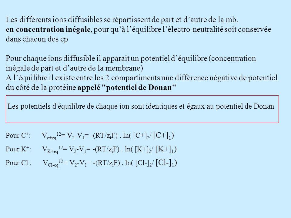 Les différents ions diffusibles se répartissent de part et dautre de la mb, en concentration inégale, pour quà léquilibre lélectro-neutralité soit con
