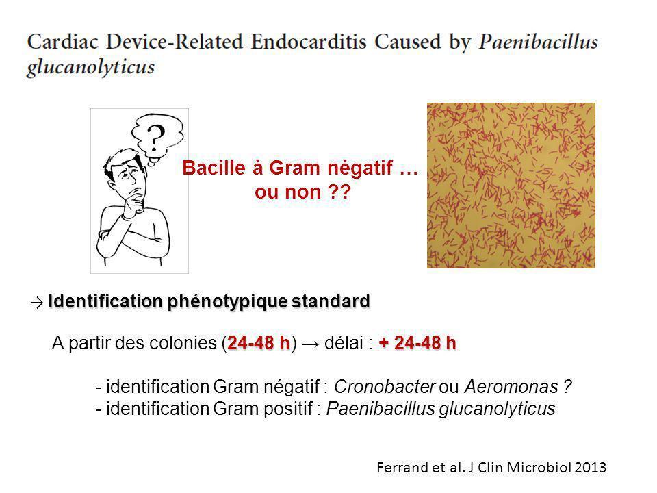 Identification phénotypique standard 24-48 h+ 24-48 h A partir des colonies (24-48 h) délai : + 24-48 h - identification Gram négatif : Cronobacter ou
