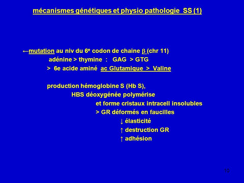 10 mécanismes génétiques et physio pathologie SS (1) mutation au niv du 6 e codon de chaine (chr 11) adénine > thymine : GAG > GTG > 6e acide aminé ac