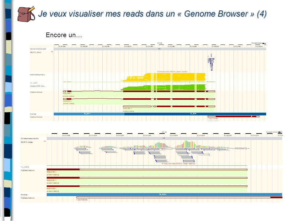 Je veux visualiser mes reads dans un « Genome Browser » (4) Encore un…