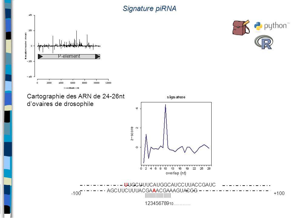 Signature piRNA UUGCUUUCAUGGCAUCCUUACCGAUC AGCUUCUUUACGAAACGAAAGUACCG -100+100 ||||||||||||||||||||| 123456789 10............. P-element Cartographie