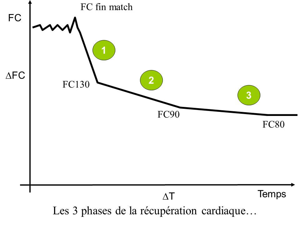 FC Temps FC T Les 2 phases de la récupération cardiaque… FC fin test 1 FC130 2 FC90 3 FC80 Phase rapide Phase rapide : Contrôle neuro-végétatif. Retou