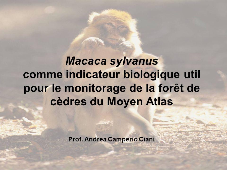 Macaca sylvanus comme indicateur biologique util pour le monitorage de la forêt de cèdres du Moyen Atlas Prof. Andrea Camperio Ciani