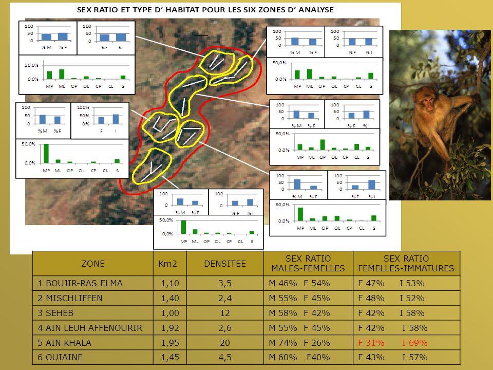 ZONEKm2DENSITEE SEX RATIO MALES-FEMELLES SEX RATIO FEMELLES-IMMATURES 1 BOUJIR-RAS ELMA1,103,5M 46% F 54%F 47% I 53% 2 MISCHLIFFEN1,402,4M 55% F 45%F 48% I 52% 3 SEHEB1,0012M 58% F 42%F 42% I 58% 4 AIN LEUH AFFENOURIR1,922,6M 55% F 45%F 42% I 58% 5 AIN KHALA1,9520M 74% F 26%F 31% I 69% 6 OUIAINE1,454,5M 60% F40%F 43% I 57%