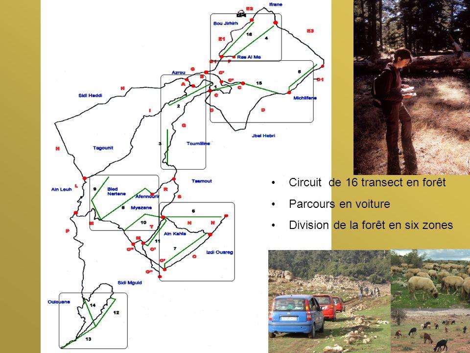Circuit de 16 transect en forêt Parcours en voiture Division de la forêt en six zones