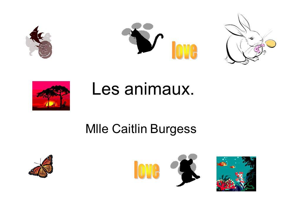 Les animaux. Mlle Caitlin Burgess