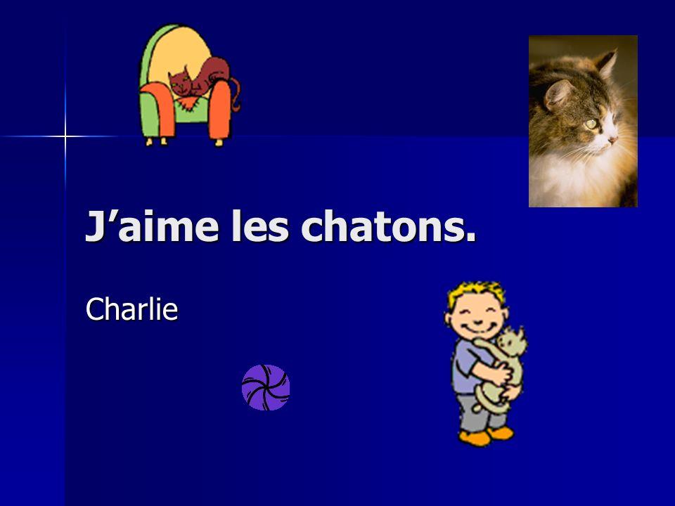 Jaime les chatons. Charlie
