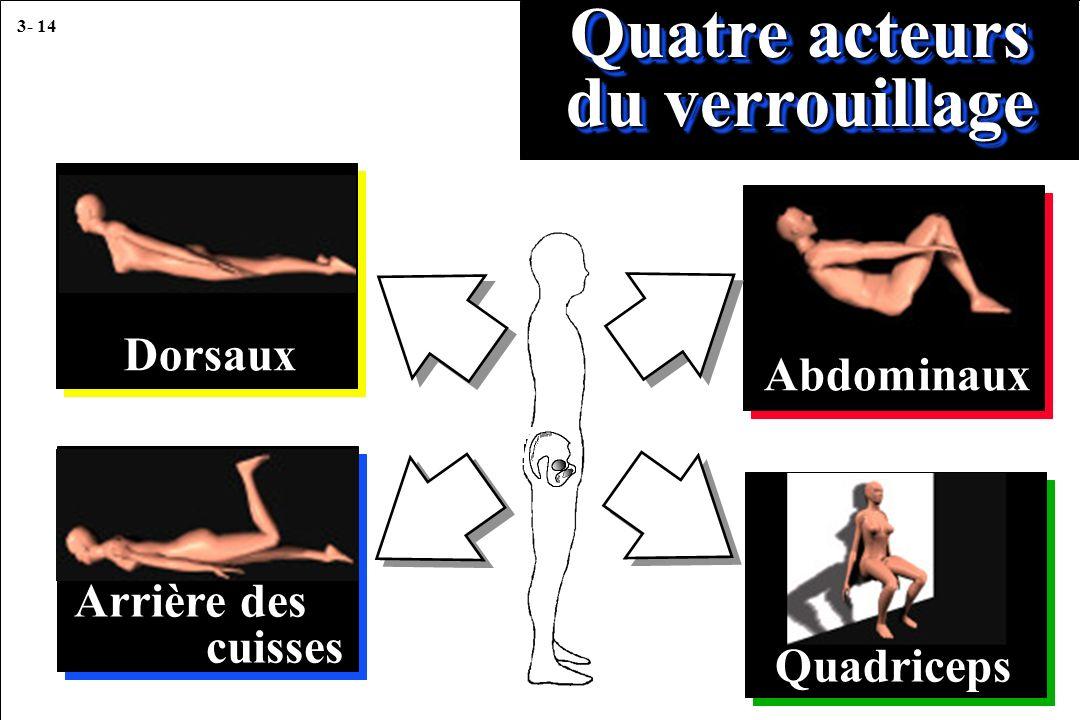 3- 14 Quatre acteurs du verrouillage Dorsaux Arrière des cuisses Abdominaux Quadriceps