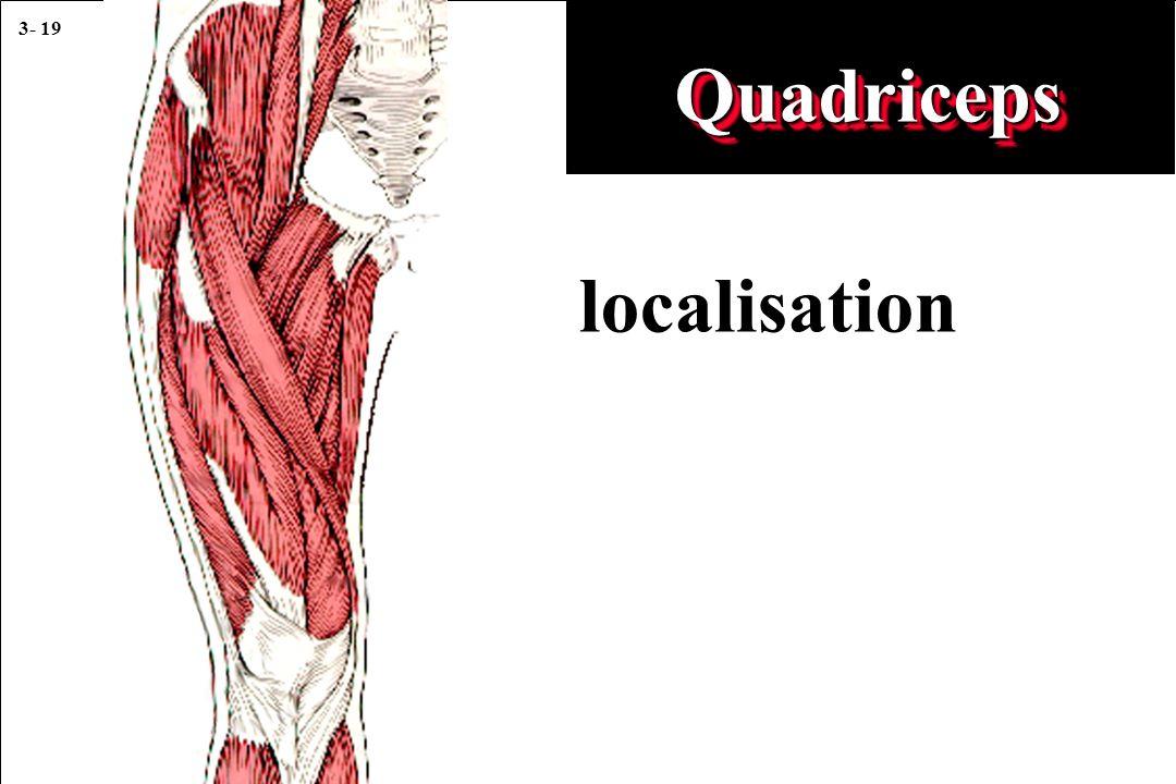 3- 19 localisation QuadricepsQuadriceps