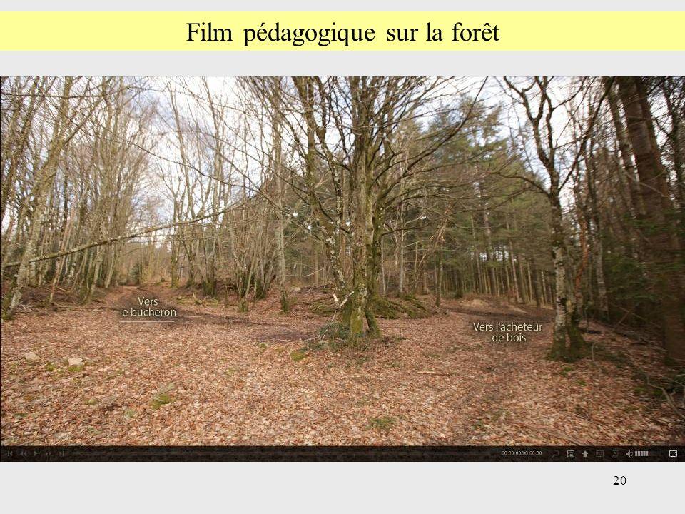 20 Film pédagogique sur la forêt