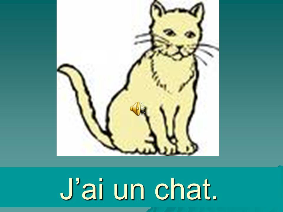 un chat Jai un chat.
