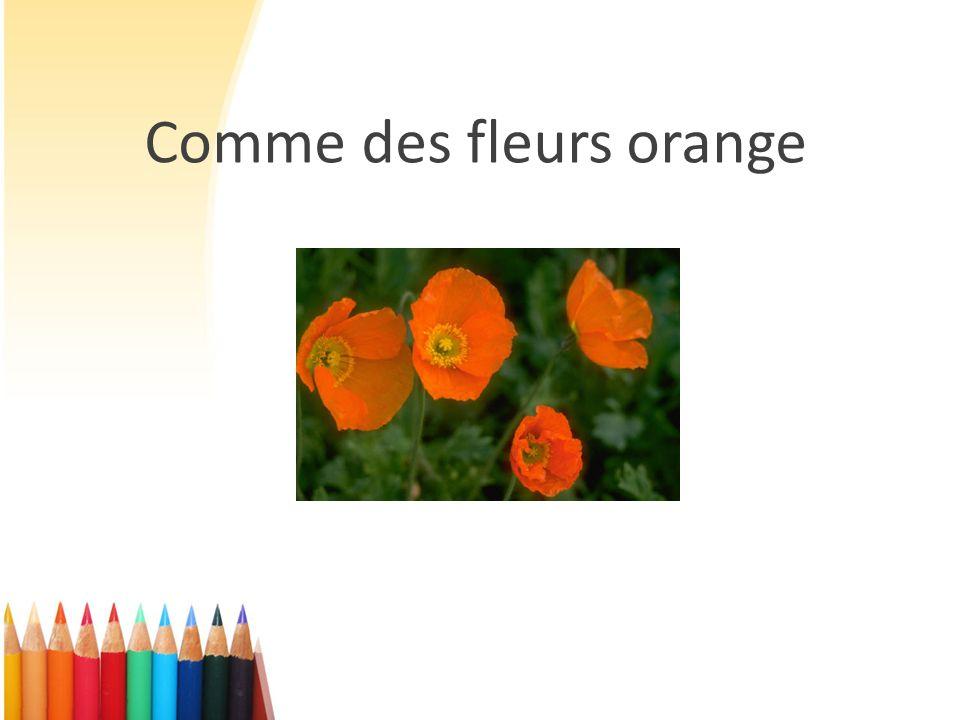 Comme des fleurs orange