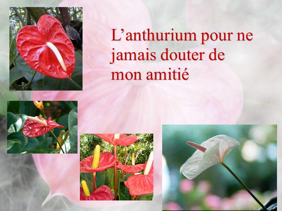 Et toute les fleurs tropicales pour rafraîchir ta journée Tu sais les fleurs ont été juste plantées juste là pour nous Par le grand et merveilleux jardinier céleste Elles sont là justes pour illuminer notre journée Noublions pas de les admirer et surtout lessentielle Noublions pas de dire merci Père pour tout cela