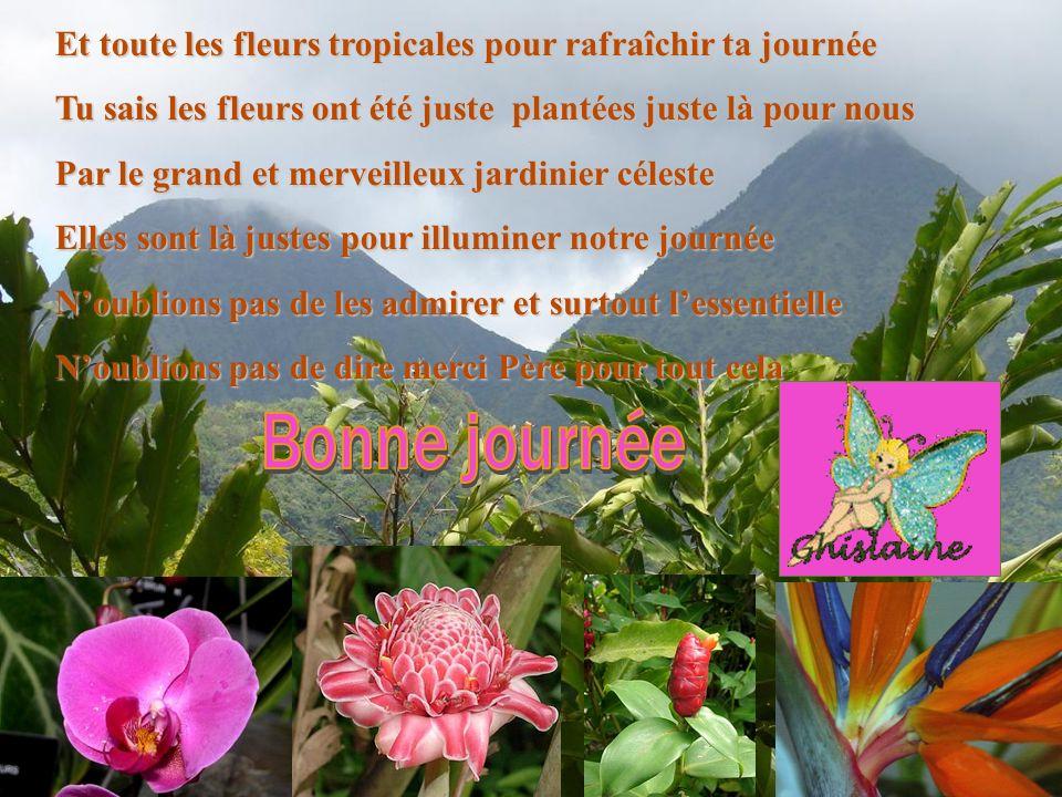 Et toute les fleurs tropicales pour rafraîchir ta journée Tu sais les fleurs ont été juste plantées juste là pour nous Par le grand et merveilleux jar