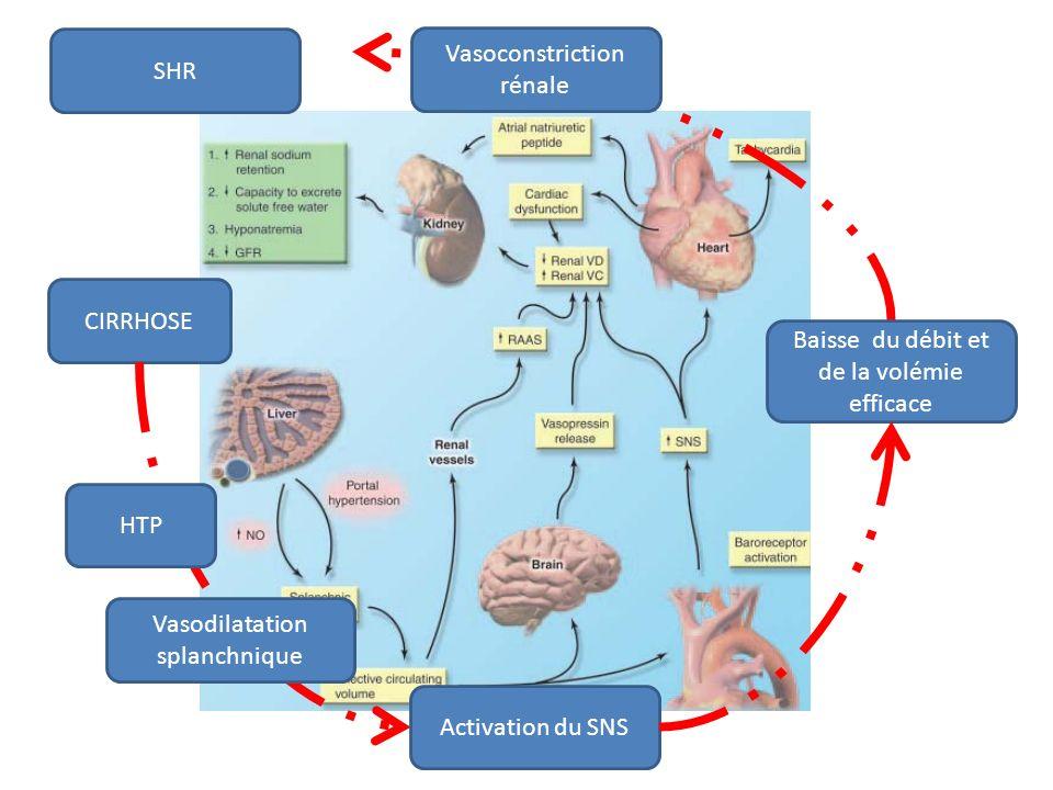 CIRRHOSE Vasoconstriction rénale Baisse du débit et de la volémie efficace HTP Vasodilatation splanchnique Activation du SNS SHR