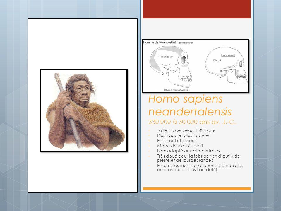 Homo sapiens neandertalensis 330 000 à 30 000 ans av. J.-C. Taille du cerveau: 1 426 cm 3 Plus trapu et plus robuste Excellent chasseur Mode de vie tr