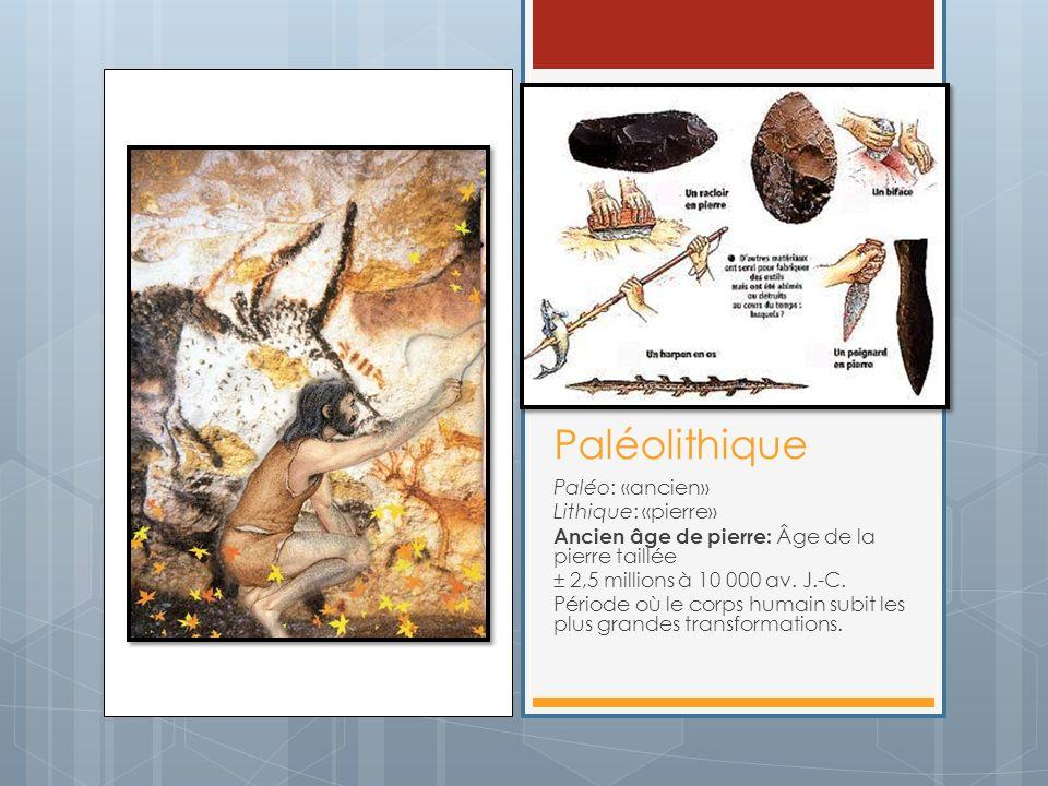Paléolithique Paléo: «ancien» Lithique: «pierre» Ancien âge de pierre: Âge de la pierre taillée ± 2,5 millions à 10 000 av. J.-C. Période où le corps