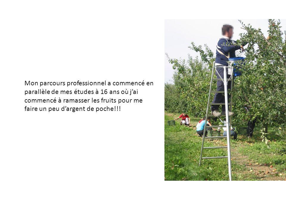 Mon parcours professionnel a commencé en parallèle de mes études à 16 ans où jai commencé à ramasser les fruits pour me faire un peu dargent de poche!!!