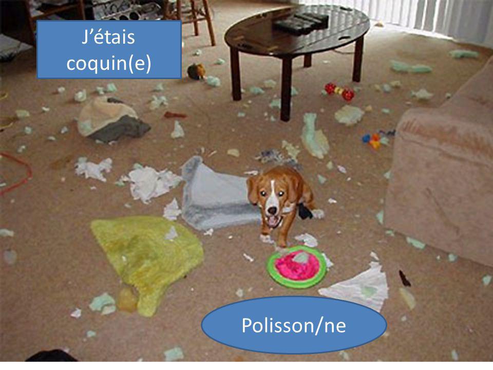 Polisson/ne Jétais coquin(e)