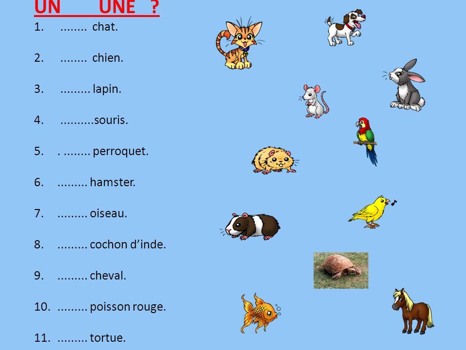 UN UNE ? 1......... chat. 2......... chien. 3.......... lapin. 4...........souris. 5.......... perroquet. 6.......... hamster. 7.......... oiseau. 8..