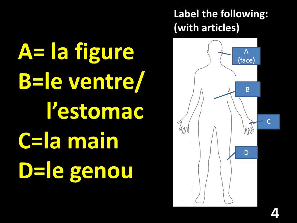 A= la figure B=le ventre/ lestomac C=la main D=le genou Label the following: (with articles) B A (face) C D 4