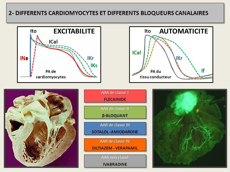 PA de cardiomyocytes INa ICal Ito IKr IKs PA du tissu conducteur IKr ICal Ito If INa ICal IKs IKr AAR de classe I FLECAINIDE AAR de classe I FLECAINID